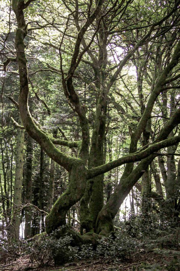 Paysages du Morvan : Forêt du mont Beuvray