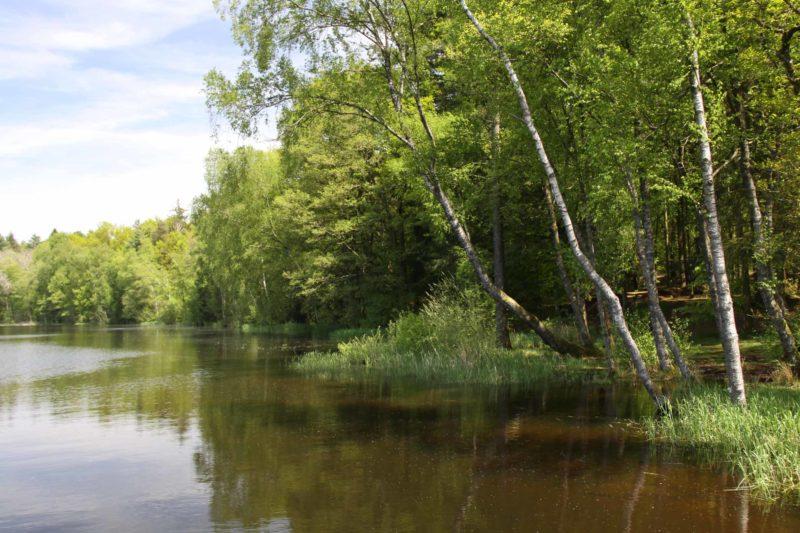 Lacs des Settons : sentier le long des berges