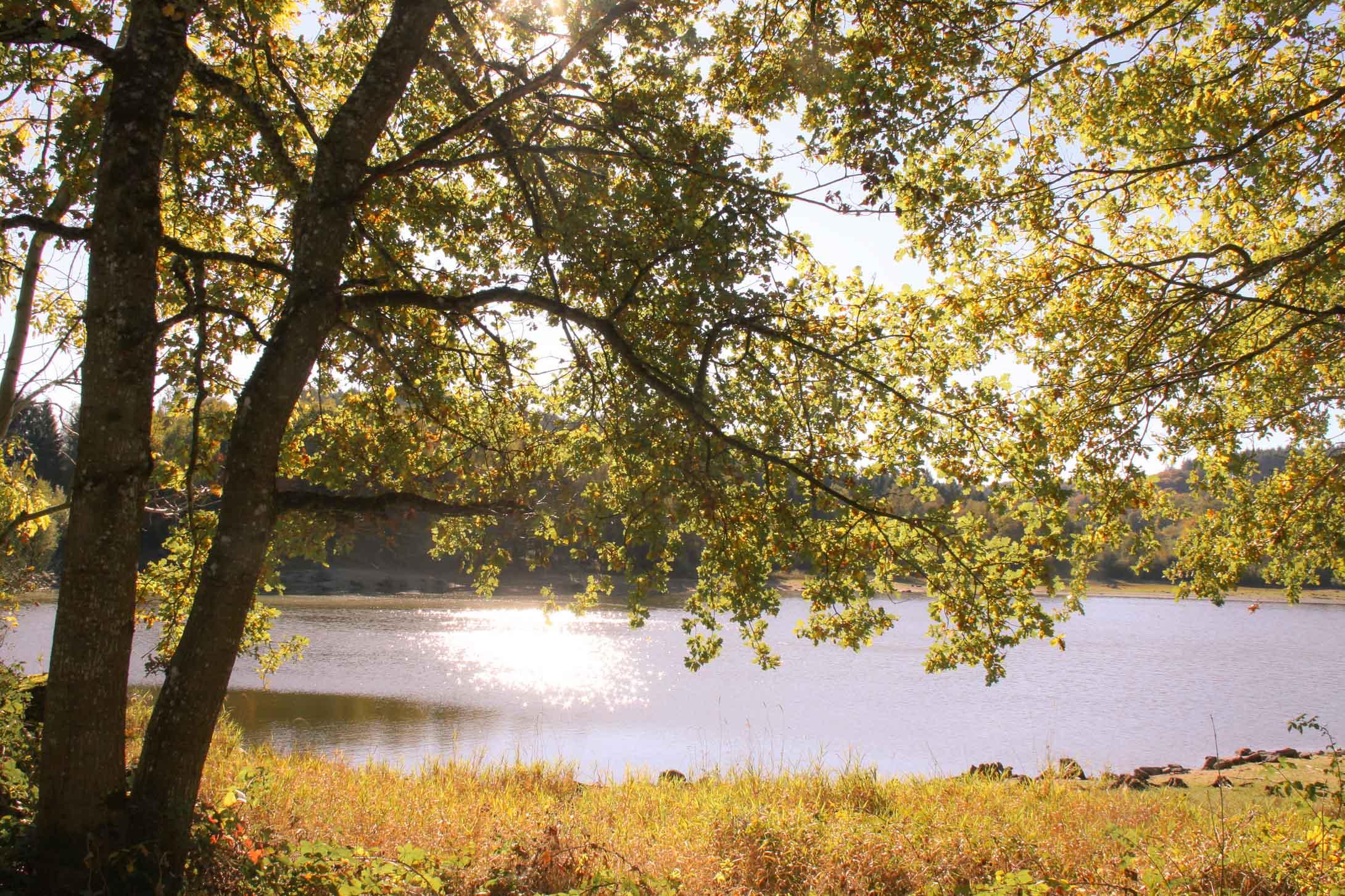 Lac de Chamboux : sentier autour de l'étang Guijon