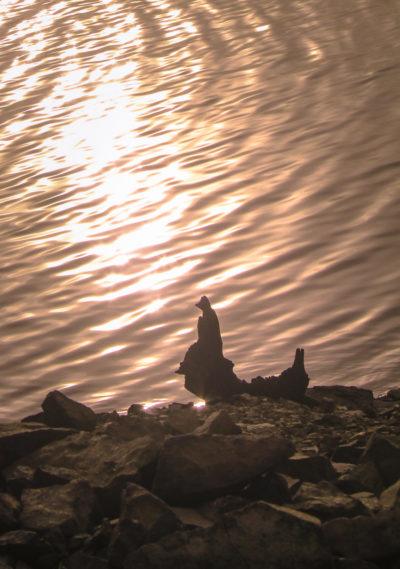 Le pêcheur du Lac de Pannecière
