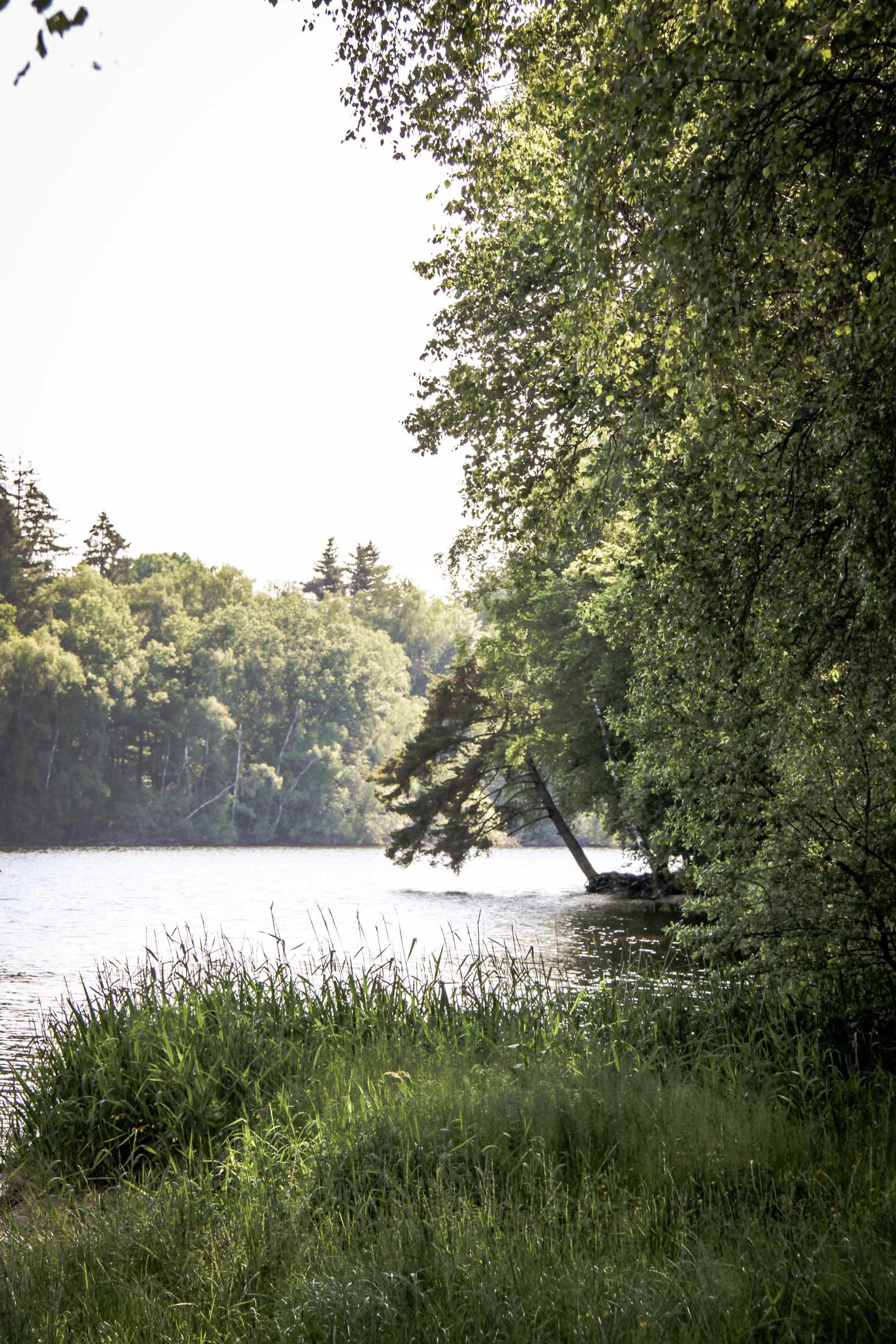 Lacs des Settons : sentier le long des berges à la queue du lac