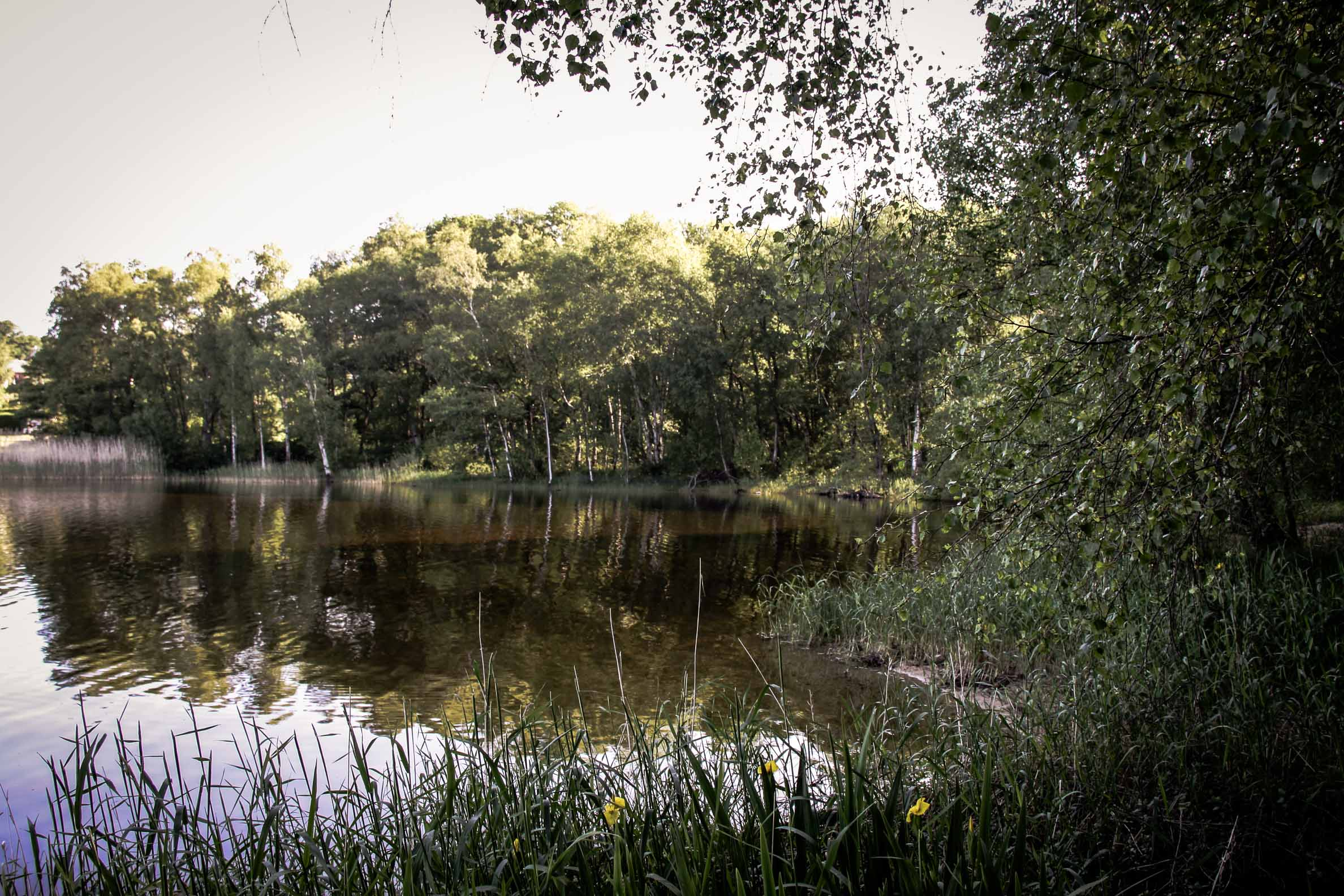 Lacs des Settons : sentier le long des berges (2)
