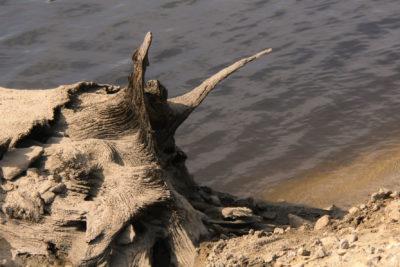 Monstre de bois au lac du Crescent