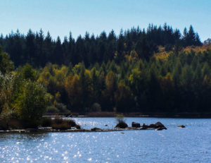 Grands lacs du Morvan : le Griottier Blanc