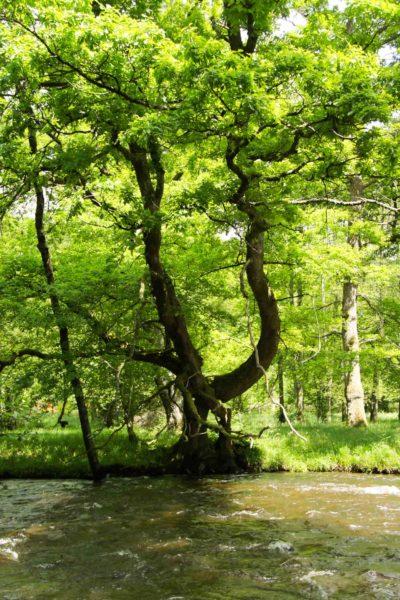 Eaux vives Morvandelles : Les îles Ménéfrier - La Cure (1)