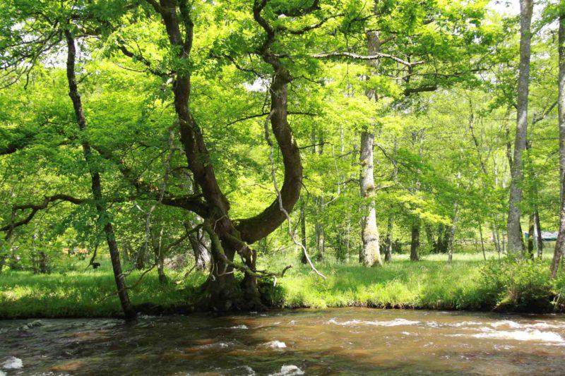 Eaux vives Morvandelles : Les îles Ménéfrier - La Cure (3)