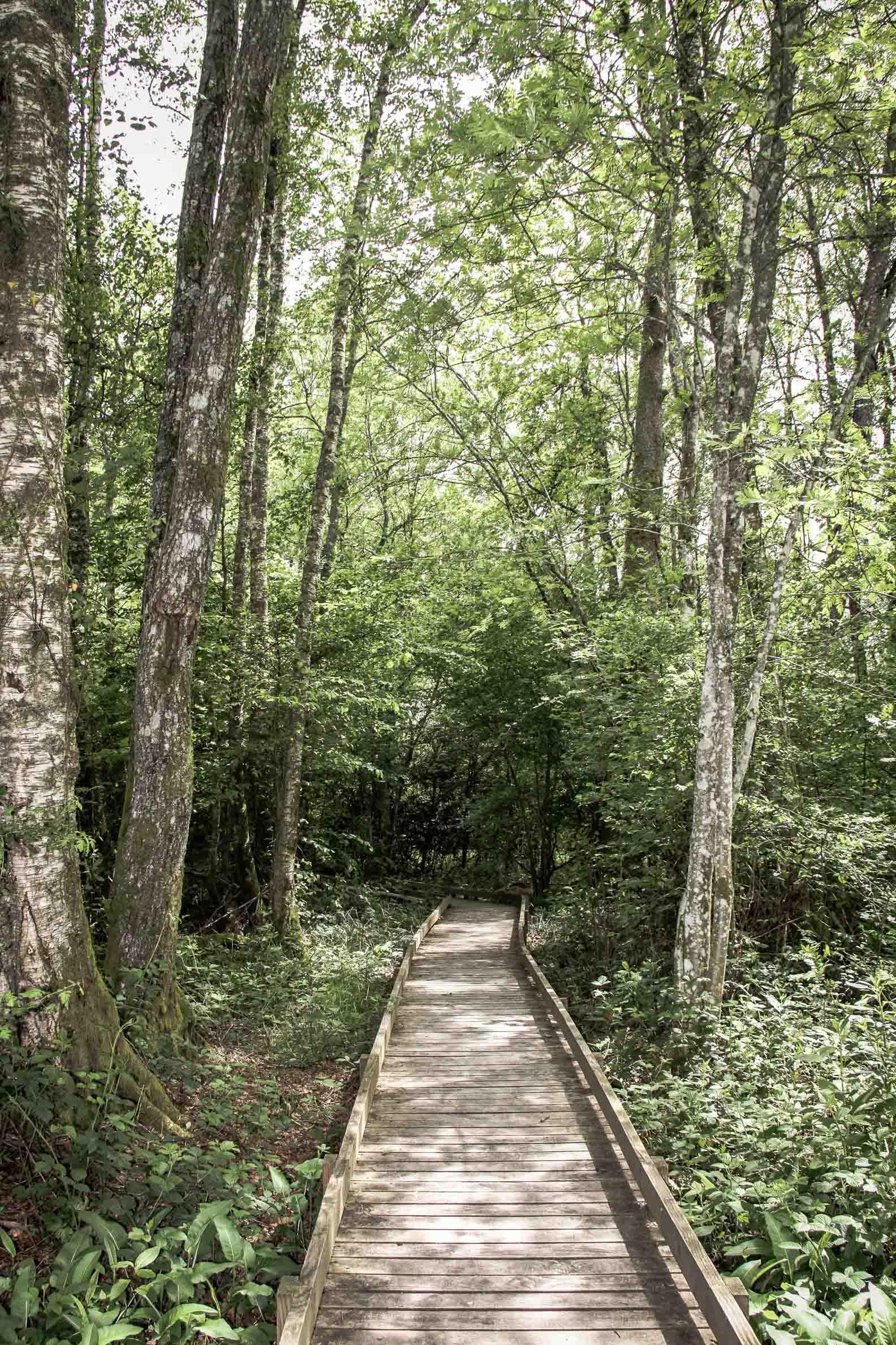 Paysages du Morvan : Saint Brisson maison du Parc, sentier de l'étang Taureau