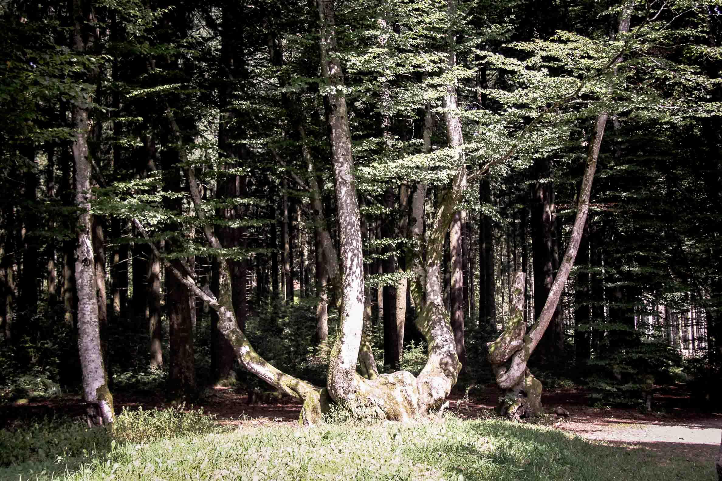 Paysages du Morvan : Bibracte queules du mont Beuvray