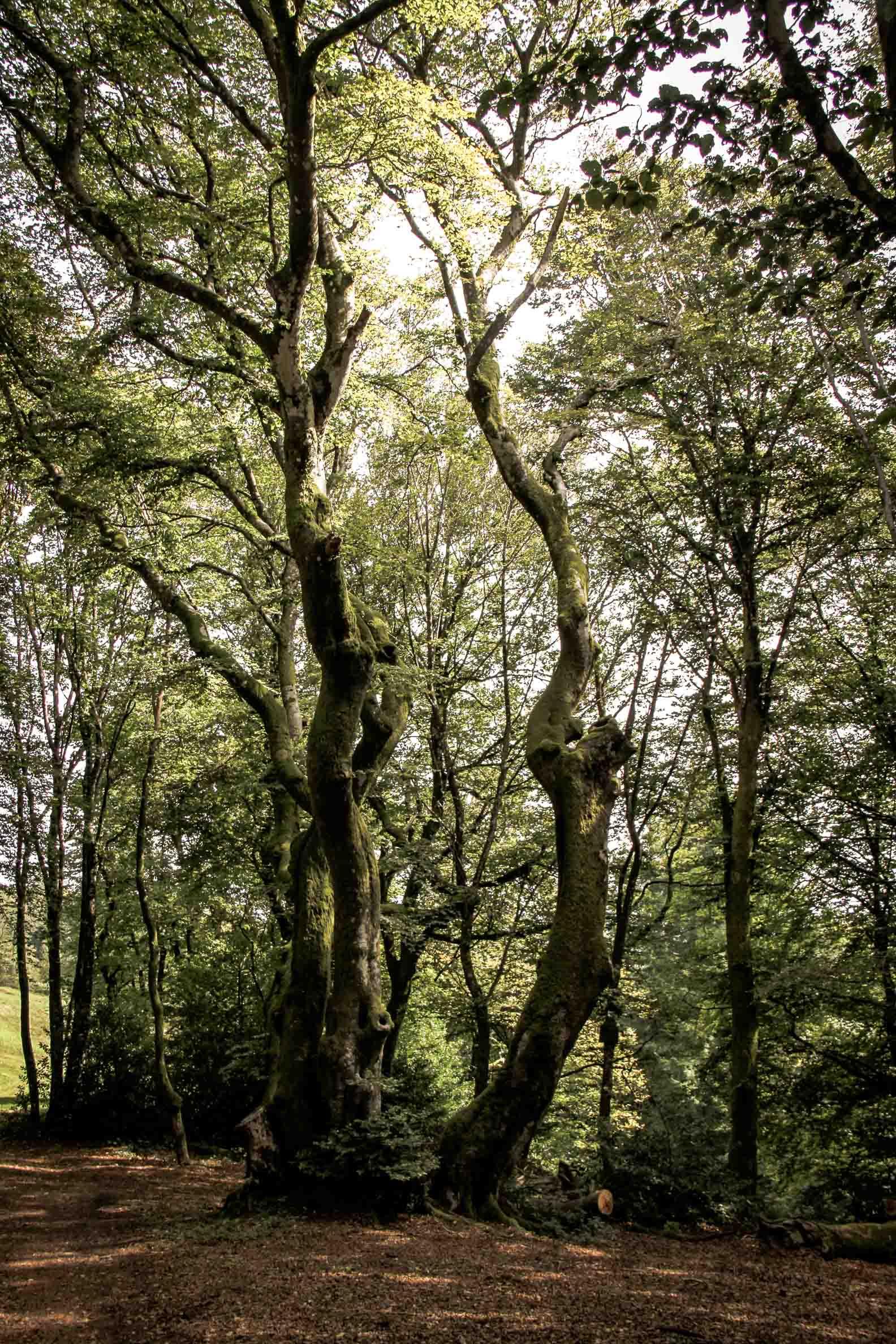 Paysages du Morvan : Mont Beuvray : queule