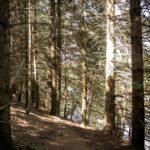 Sentier au bord du lac de Chaumeçon