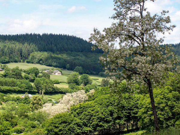 Paysages du Morvan : vers le village de Corancy