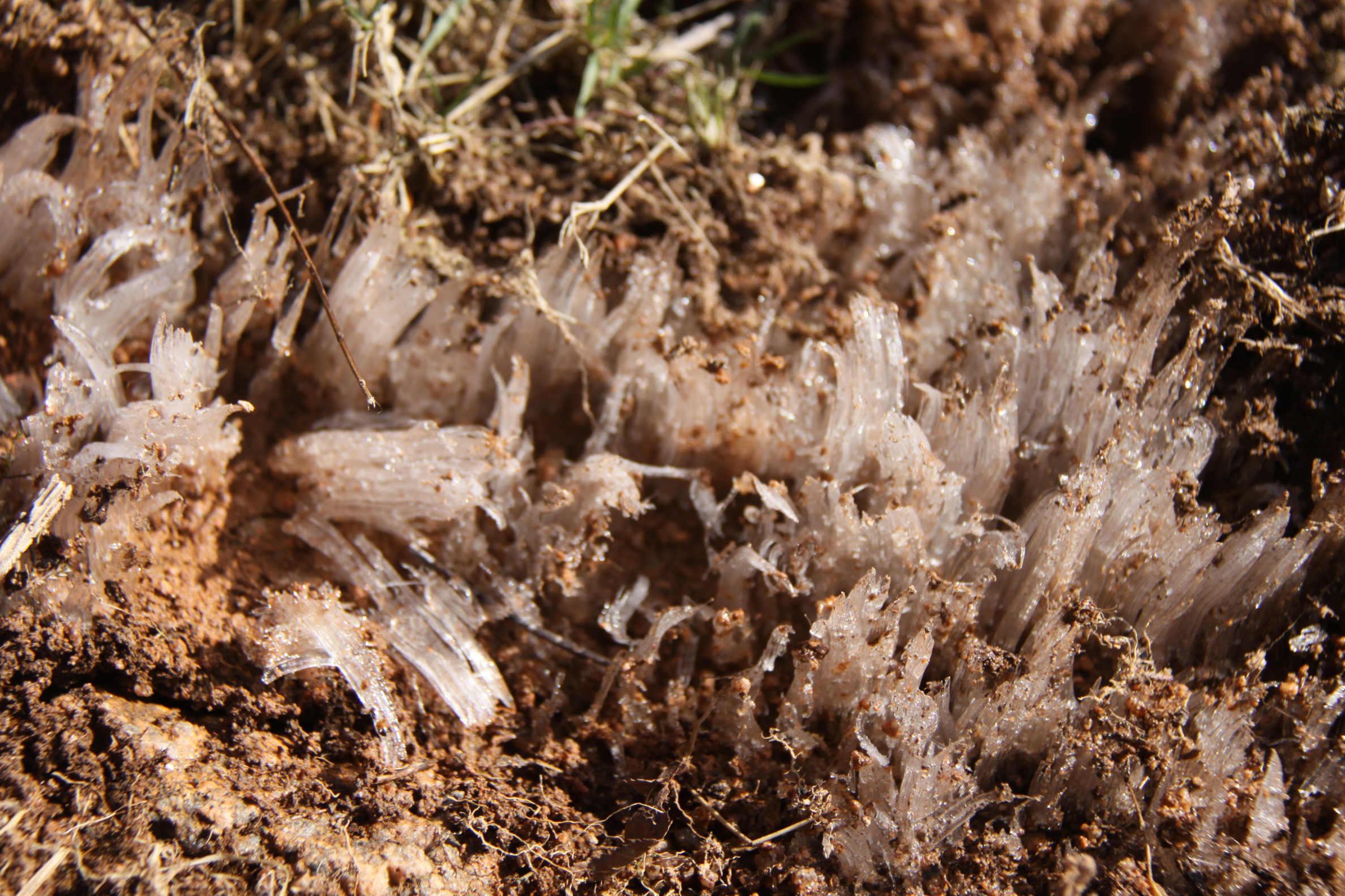 Nature insolite Morvandelle : cristallisation de glace dans le sable au lac de Saint-Agnan (2)