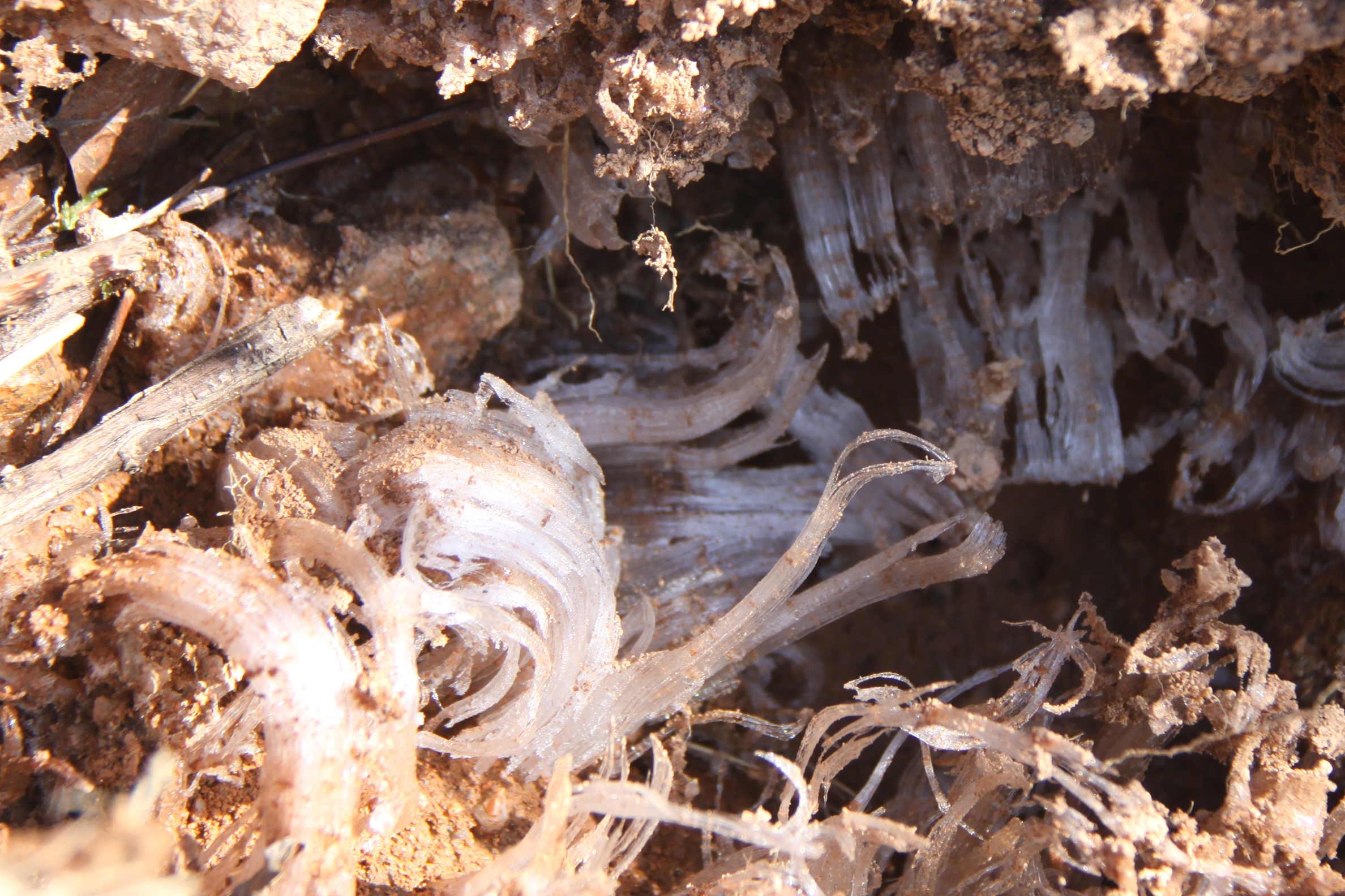 Nature insolite Morvandelle : cristallisation de glace dans le sable au lac de Saint-Agnan