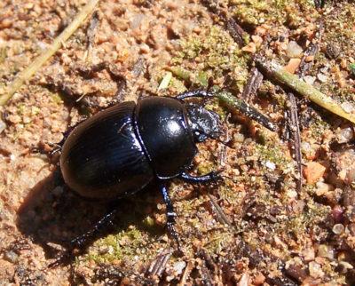Faune Morvandelle: insecte (1)