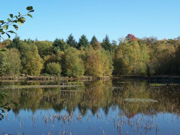 autres plans d'eau remarquables : Réservoir du Griottier Blanc octobre 2017 (5)