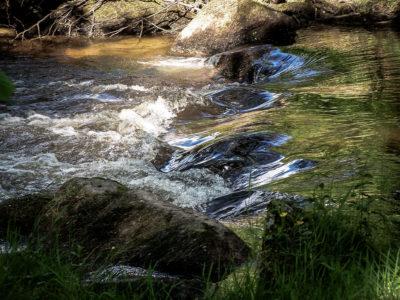 Eaux vives Morvandelles : le Chalaux (4)