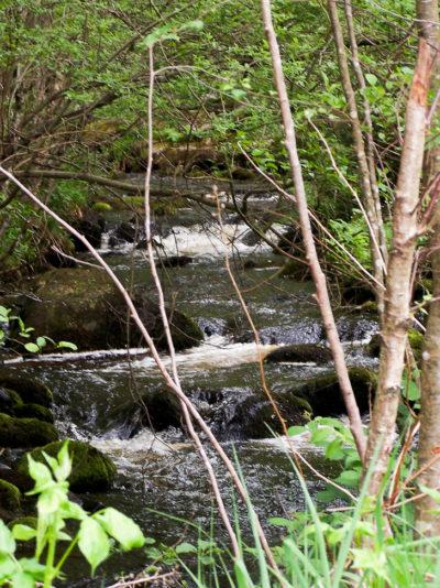 Eaux vives Morvandelles : le Ternin (2)