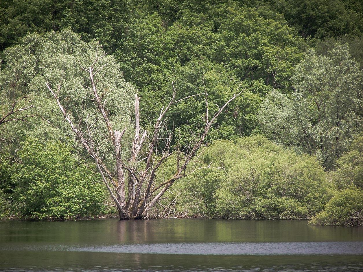 Lac de Pannecière : queue du lac
