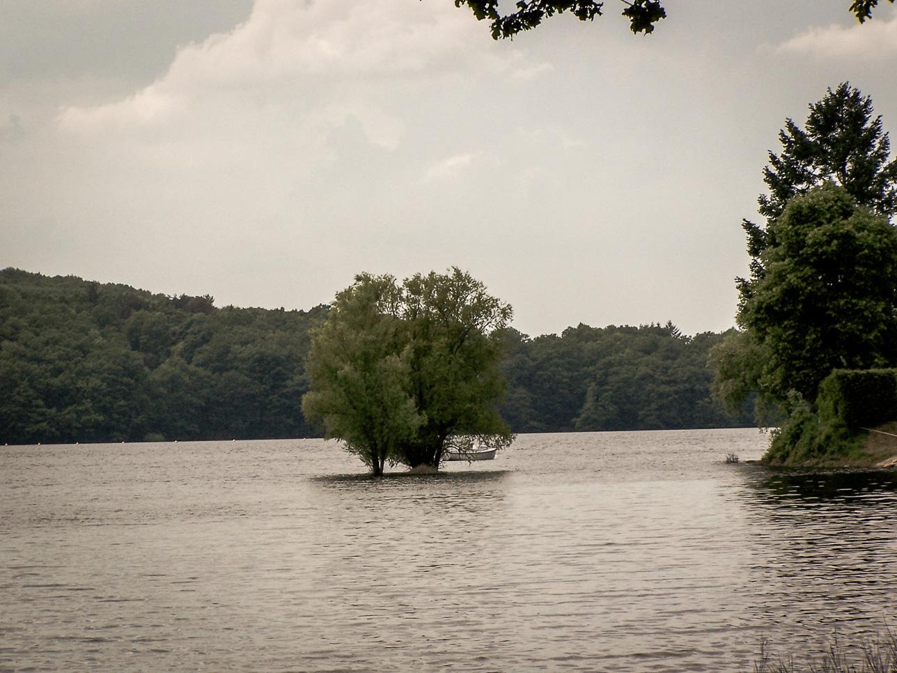 Lac de Pannecière insolite: La barque à côté de la tête du chêne