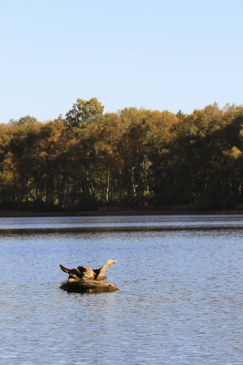 Lac de Saint-Agnan octobre 2017 sur le sentier autour du lac : bois fossile