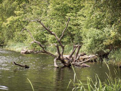 Lac de Saint-Agnan : le monstre de bois