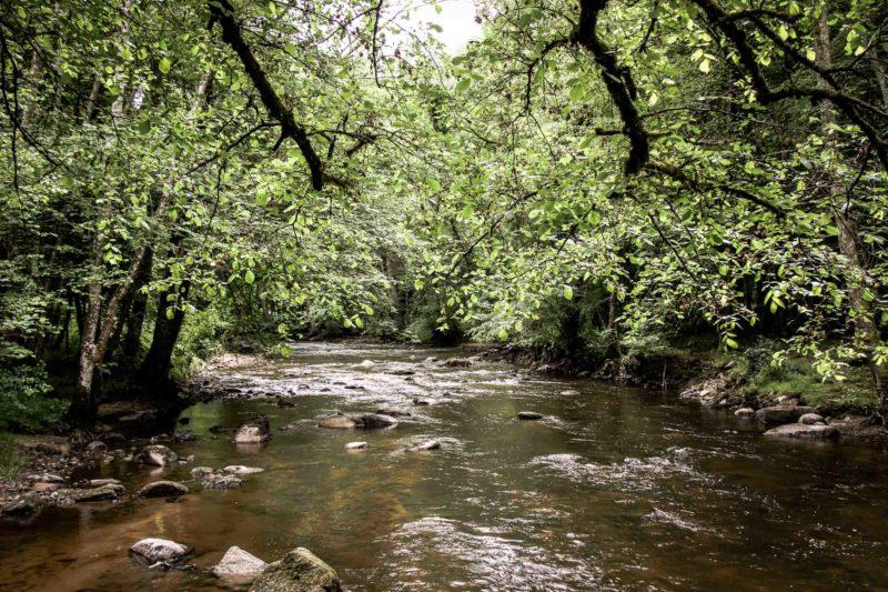 Eaux vives Morvandelles : vallée du Cousin à Avallon (11)