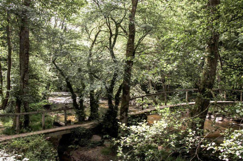Eaux vives Morvandelles : vallée du Cousin à Avallon (8)